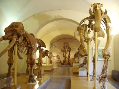 Florence Museum of Natural History